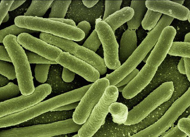 mikrobiota-test